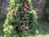 Claudia Mascolo - Ops ...ho sbagliato albero